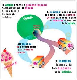 HEALTHY LIVING - Centro de Nutrición Avanzada